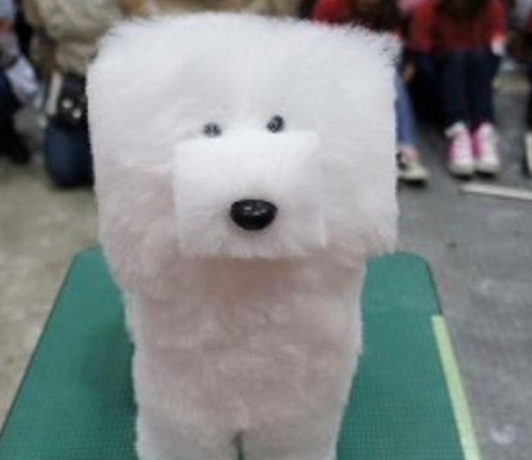 Cutting Dogs Hair Into Cubes Is Actually A Thing In Japan